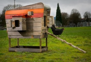 Not my backyard chook set-up, but it'd be great if it was - there'd be oodles of rituals to be found