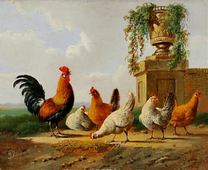 'Chickens and Park Vase' by Albertus Verhoesen - may not be representative of my chook set-up. (Image source: Wikipedia Commons)